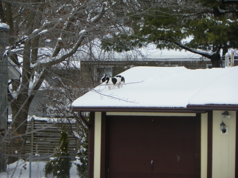 Dog on Roof
