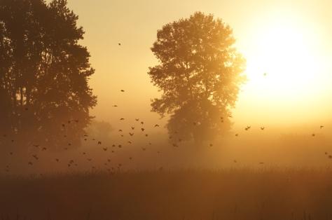 Fog in Morning