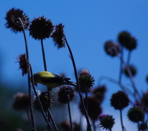 Bowing Bird