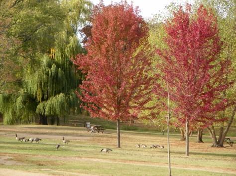 Phalen Autumn
