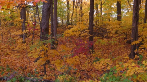 Wooded glade in Fall Colors