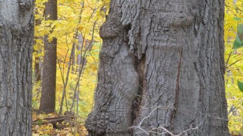 Trunk with Lamb